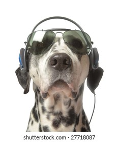 Cool Movie Director, or grooving dalmatian