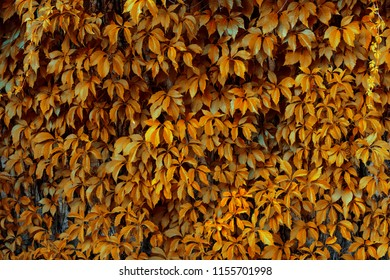 Cool orange background of leafs