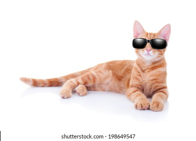 Cool party cat or summer holiday vacation cat in sunglasses
