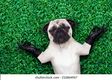 cool pug dog holding a blank placard or blackboard on the grass or meadow in the park wearing fancy sunglasses