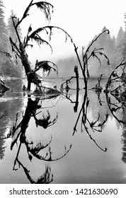 Cool reflection on a foggy day at Blind Slough, Petersburg Alaska