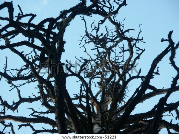 A cool tree with many branches