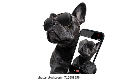 cool trendy posing french bulldog with sunglasses looking up like a model , taking a selfie , isolated on white background