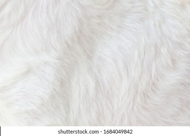 Cool white background, abstract pattern, close-up