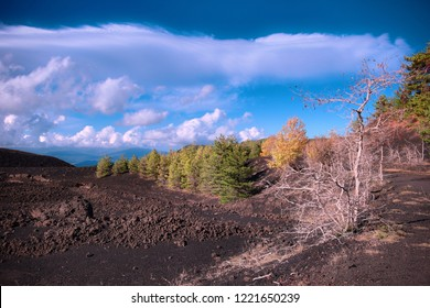 cooled lava field and autumnal mixed forest in Etna Park, Sicily