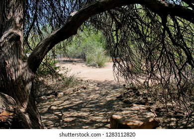 A cooling shaded view beneath an overhanging tree in the Arizona Sonoran desert