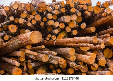 COOS BAY, OREGON, USA - JULY 21, 2009: Log yard, at Weyerhaeuser lumber mill.