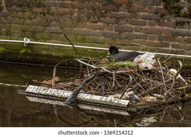 """A coot sits on her nest on a man-made breeding platform in Amsterdam, with a handwritten Dutch sign reading, """"MEERKOETJE BROEDPLAATS,"""" meaning """"Coot nesting place"""""""