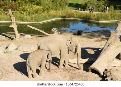COPENHAGEN, DENMARK - October 07, 2019: Big adult elephant with baby elephant in the zoo. Elephants family in captivity.