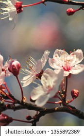 Copper beech close ups and flowers
