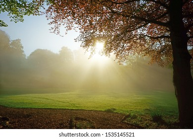 A Copper Beech tree, Fagus sylvatica f. purpurea, backlit by a rising sun through an early morning mist in spring, Rococo Gardens, Painswick, Gloucestershire, England, UK