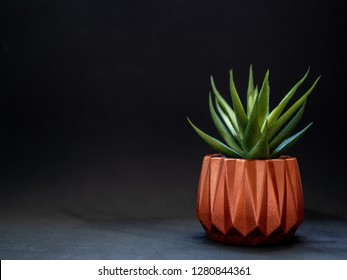 Copper metallic geometric planter on black background with copy space. Modern beautiful painted concrete planter and cactus plants or succulent plants. Home and garden decoration concept.