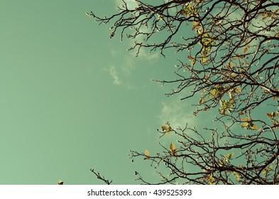 Copy space of autumn tree branch with blue sky background.Retro color style.
