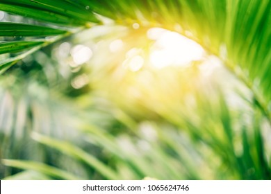Copy space of blur palm leaf tree on blue sky and white clouds with bokeh sun ligth abstract texture background. Ecology and environment concept. Vintage tone filter effect color style.