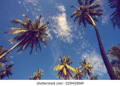 copy space of palm coconut trees with beautiful bluesky.asia travel and vacation concept.moder colour tone filter.