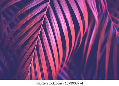 Copy space pink tropical palm tree on sky abstract background. Summer vacation and nature travel adventure concept. Vintage tone filter effect color style.