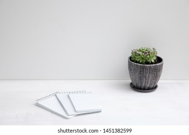 Copy space. sempervivum succulent plant in ceramic pot on white background with shadow