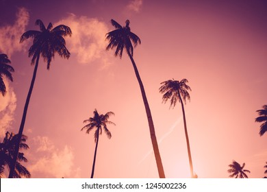 Copy space of silhouette tropical palm tree with sun light on sunset sky and cloud abstract background. Summer vacation and nature travel adventure concept. Vintage tone filter effect color style.