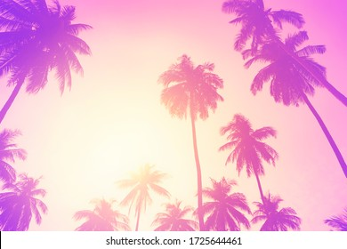 Copy space of silhouette tropical palm tree with sun light on sunset sky and cloud abstract background. Summer vacation and nature travel adventure concept. Pastel tone filter effect color style.