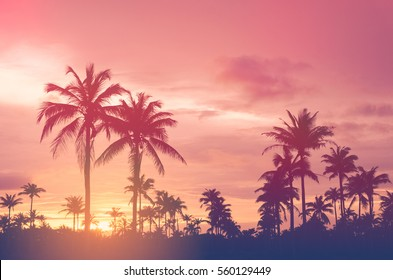 Copy Space Of Silhouette Tropical Palm Tree With Sun Light On Sunset Sky And Cloud Abstract