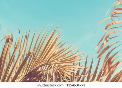 Copy space tropical palm tree with sun light on blue sky and cloud abstract background. Summer vacation and nature travel adventure concept. Vintage tone filter effect color style.
