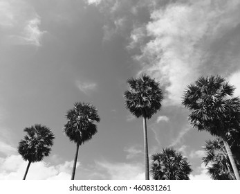 Copy space of tropical palm tree with sun light on sky background. Summer vacation and nature travel concept. Vintage tone filter color style.