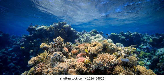 Coral Barrier Reef