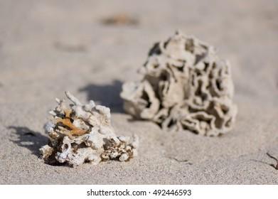 Coral at beach