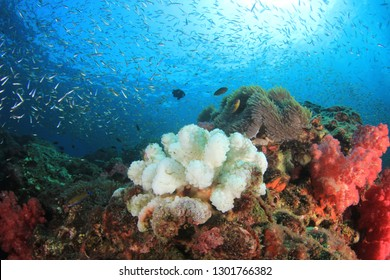 Coral bleaching from climate change