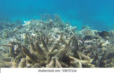 Coral bleaching on the Great Barrier Reef, Port Douglas, Far North Queensland