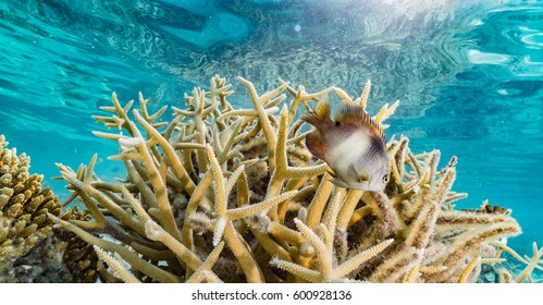 Coral and Damselfish