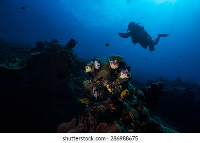 Coral and diver