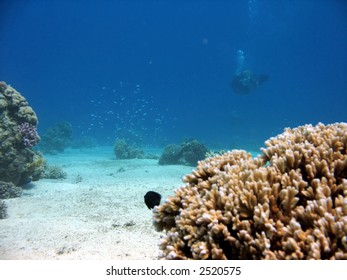 Coral with diver in background