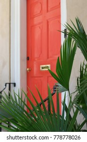Coral Door and Palms