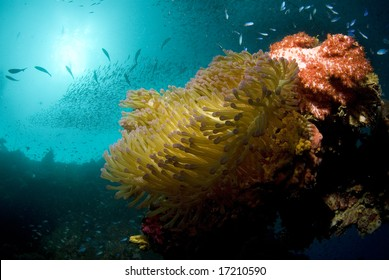 A coral encrustation with anemone, fish swarming and the sun breaking through the surface of the ocean.