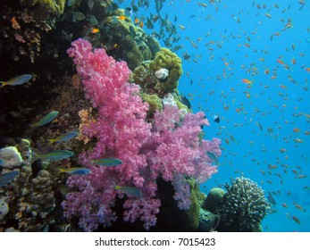 Coral and fish. shot in the Red Sea