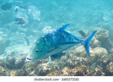coral fish in their natural environment