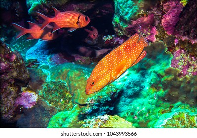 Coral fishes underwater life photography