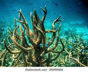 Coral formations in Queensland Ocean - Australian Coral Reef.