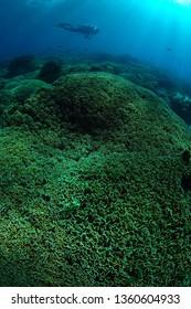 coral garden in sipadan