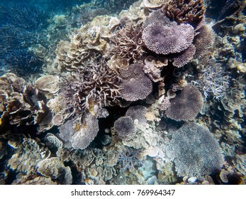 Coral Gardens, Ningaloo Reef, Western Australia