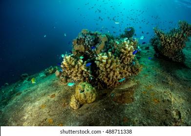Coral growth on the hull of a sunken WWII cargo ship, Gosei Maru, at Truk Lagoon