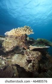 Coral head, Fiji