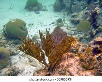 Coral head with hard and soft corals grows out of a sandy bottom off the coast of Ambergris Key, Belize