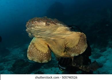coral life diving Indonesia Sea Ocean