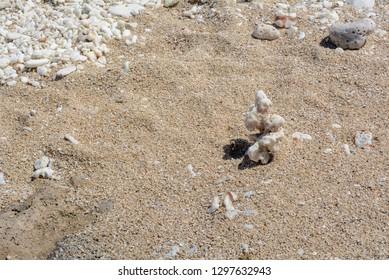 Coral on a Sandy Beach