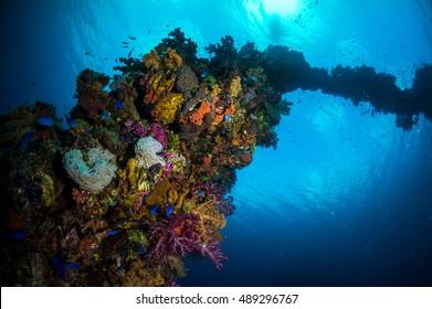 Coral on sunken shipwreck