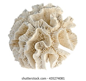 coral on white background