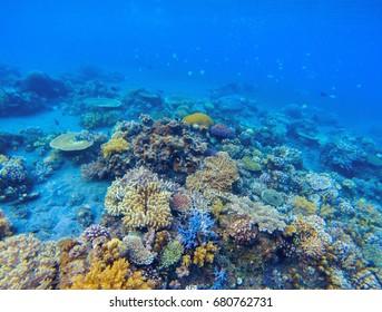 Coral panorama in tropical seashore. Undersea landscape photo. Fauna and flora of tropical shore. Coral reef underwater photo. Snorkeling in tropics. Exotic island seaside vacation. Aquarium banner