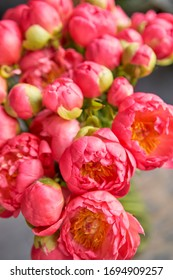 Coral peonies in a glass vase on wooden table. Beautiful peony flower for catalog or online store. Floral shop concept . Beautiful fresh cut bouquet. Flowers delivery.